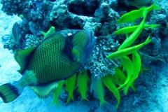 Beautiful Red Sea