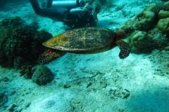Similani safari sukeldumised