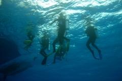 Veealune maailm pildil