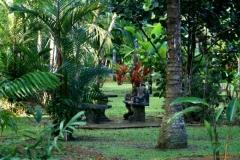 palmiaed