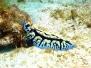 Bali Sulawesi suurepärane sukeldumisreis