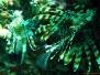 sukeldumine taimaal